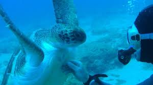 Picture of Scuba Diving in Tenerife