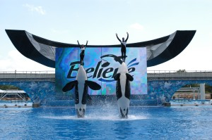 Picture of Seaworld, Orlando